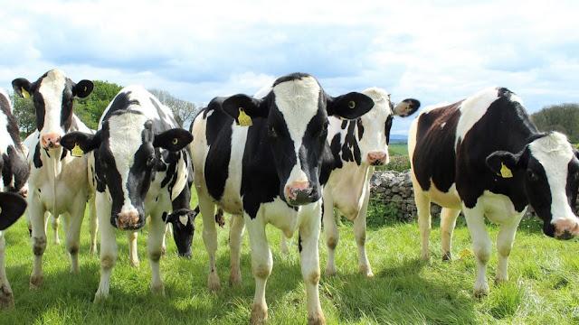 Θεσπρωτία: Ξέμειναν από νερά τα ζώα στα ορεινά της Θεσπρωτίας