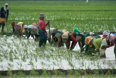 Ekonomi Agraris Dan NonAgraris