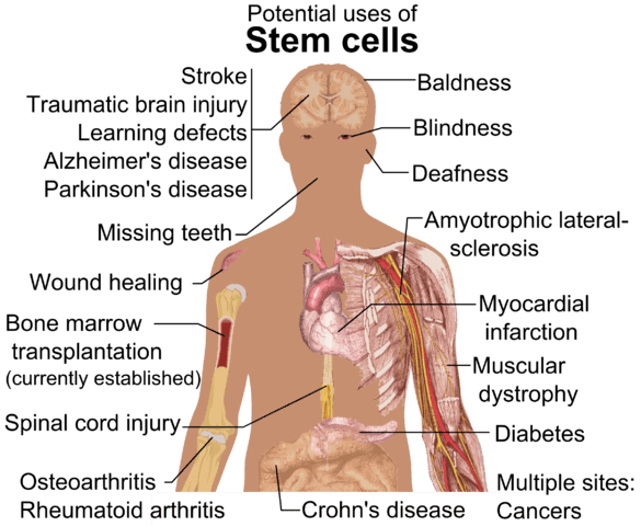 potentials of stem cells