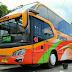 Daftar Alamat Perwakilan PO Bus Piposs Sulawesi lengkap