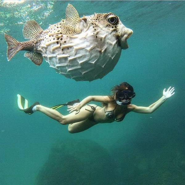 nadando com os peixes