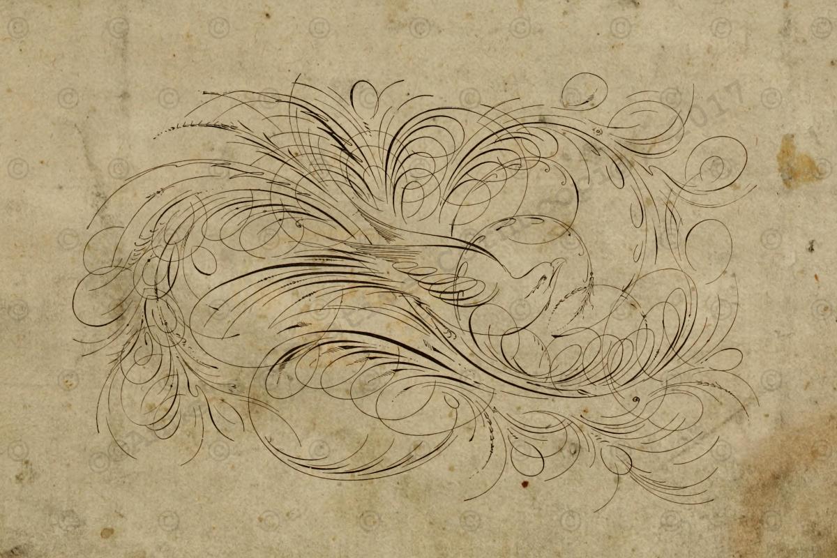 Anne 39 S Creative Cornucopia Calligraphy Flourish Bird