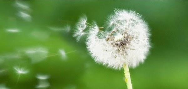 ¿Cuáles son los síntomas de las alergias alimentarias?