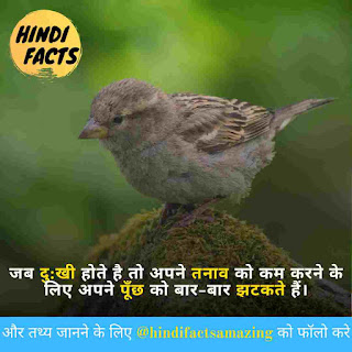 hindi facts about sparrow