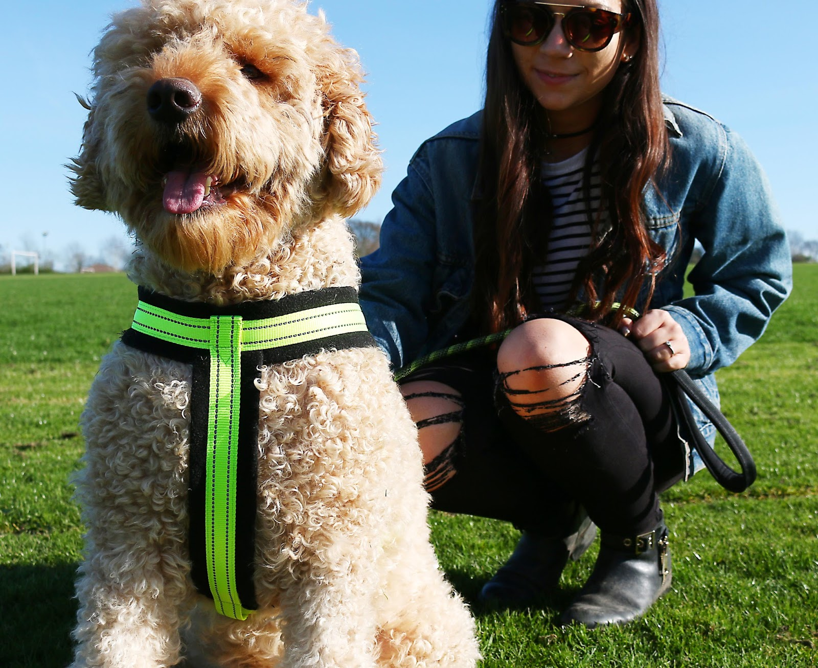 Lifestyle, Dogs, Pets, Adulting, Frankie, Having a pet dog, things ive learnt since having a dog, dog owner, dog advice, labradoodle,