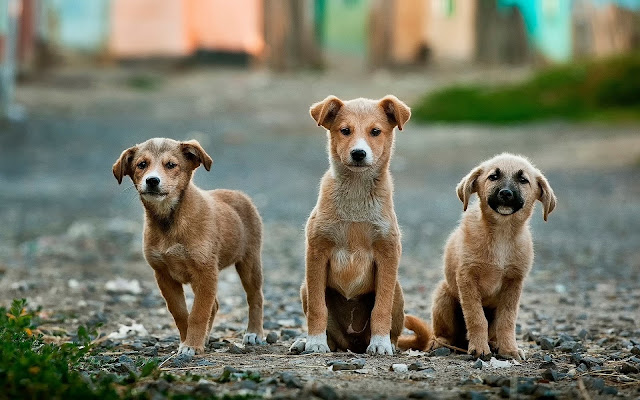 dog shelter puppies for sale