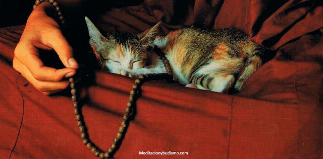 Leyenda espiritual budista sobre los gatos