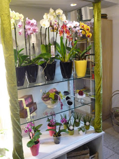 Blumenladen Orchideen