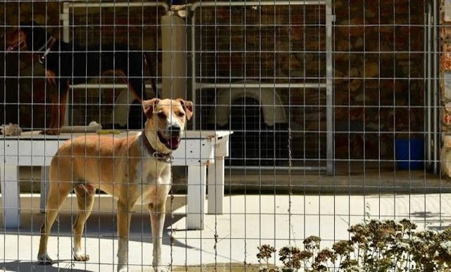 Ναύπλιο: Κλείνουν τρεις μη αδειοδοτημένες ιδιωτικές δομές φιλοξενίας αδέσποτων ζώων συντροφιάς