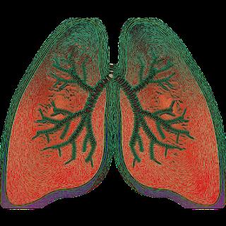 https://pixabay.com/es/illustrations/pulm%C3%B3n-respiraci%C3%B3n-asma-ox%C3%ADgeno-4051083/