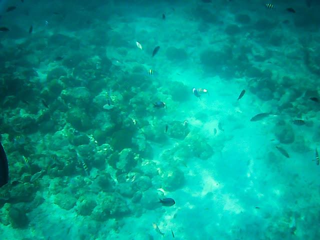 aruba pelican adventures