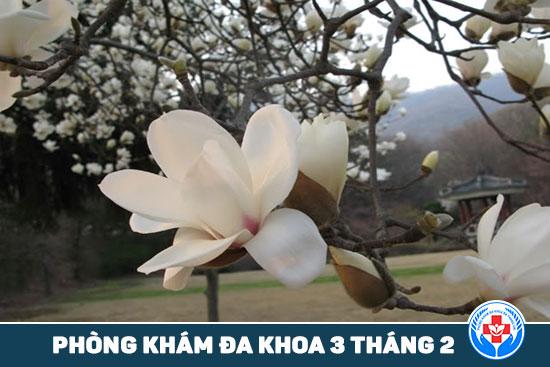 HCM - 5 loại thảo dược mà bạn có thể trồng tại ban công 5-loai-thuoc-thao-duoc-ma-ban-co-the-trong-tai-ban-cong-4
