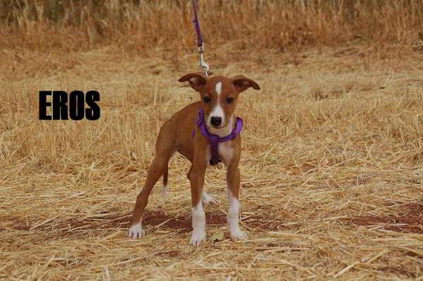cachorros de tamaño pequeño 2
