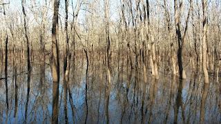 north texas duck hunting|north texas retriever training|retriever training