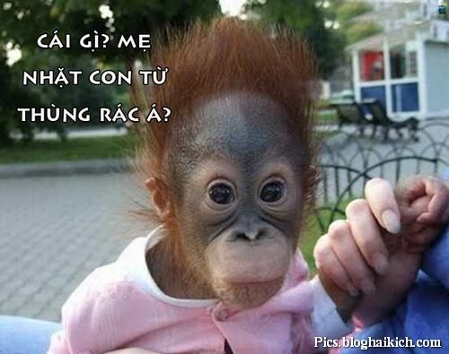 Phản ứng khó đỡ của chú Khỉ con