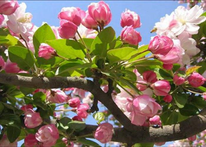 Những Đóa Hoa Thường Cắm Trong Gia Đình Ngày Tết 8