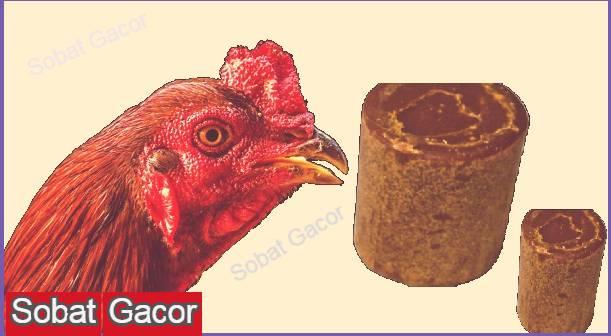 Manfaat Gula Merah Bagi Ayam Bangkok Aduan