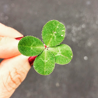 4 leaf clover Photo by Amy Reed on Unsplash