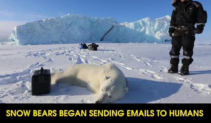 Snow Bears Began Sending Emails To Humans