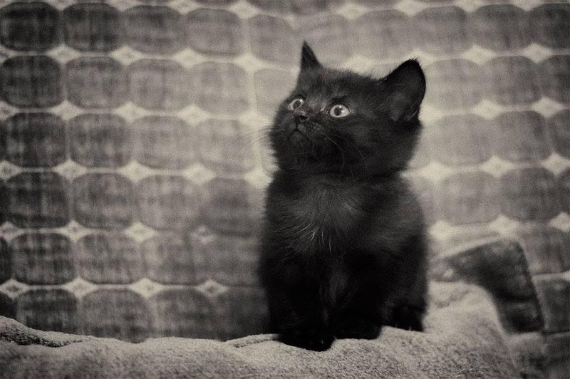 O gato preto de Machado de Assis