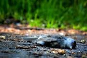on seeing the dead bird beside the sidewalk