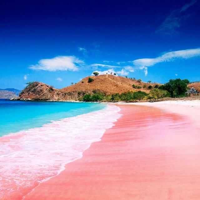 pink beach in komodo island, pink beach komodo island, komodo island pink beach, komodo beaches, komodo pink beach, pink sand beach indonesia, bali pink sand beach, komodo island indonesia pink beach, pink beach komodo indonesia, komodo beach indonesia,