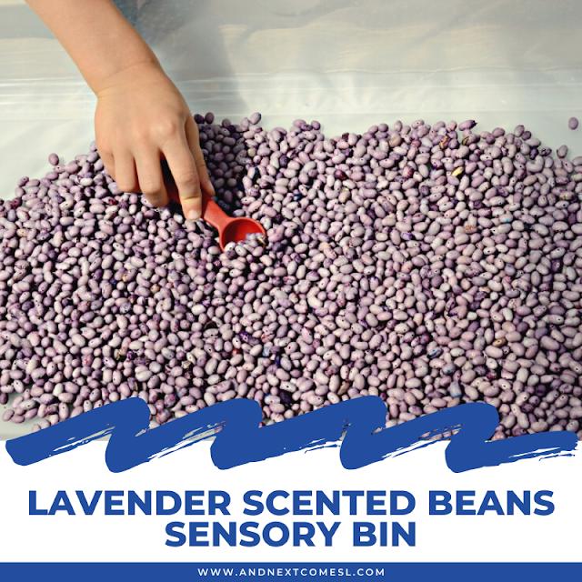 Lavender scented beans sensory bin