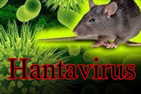 Hantavirus: Dari Karakter, Gejala, Proses Penularan hingga Vaksinasi