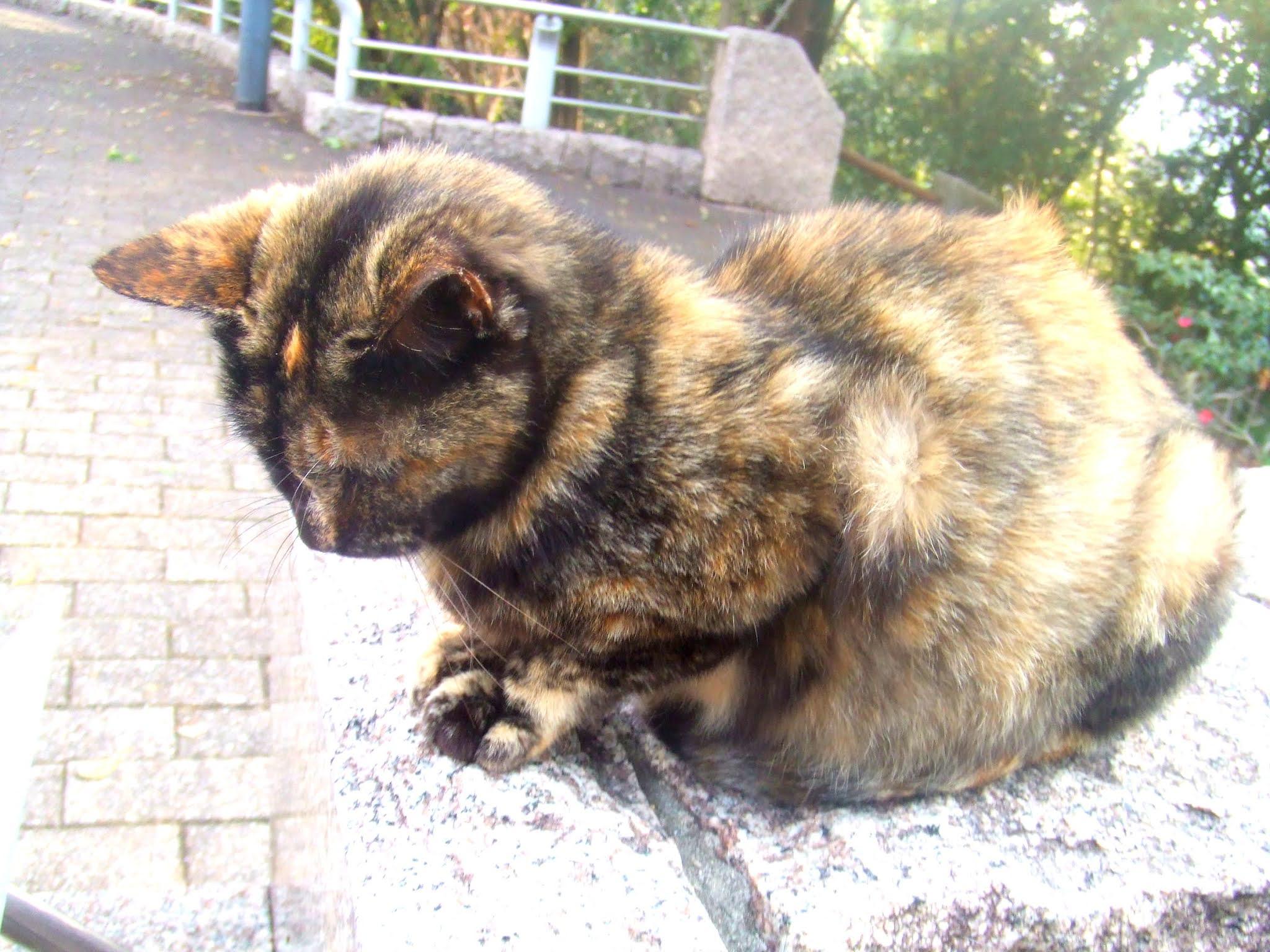 猫さんの全体の写真です。ちょっとうつむき気味で顔が見えませんが、猫ブログなどにどうでしょう。