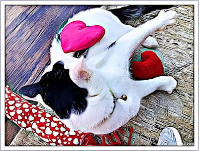 Catnip Hearts and Kicker Toy Crafting with Cats @BionicBasil® Smooch