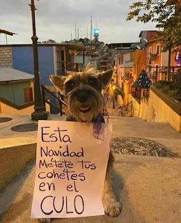 Perro con cartel contra petardos fuegos artificiales en Navidad