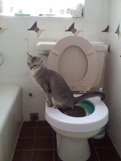 Cat Toilet Training: Make the Cat More Loveable