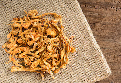 Cordyceps mushroom company in Meghalaya
