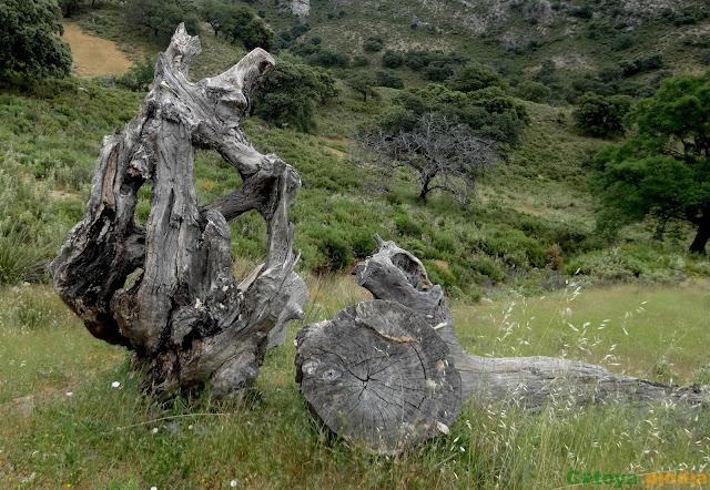 Subida al Pico la Tiñosa, techo de Códoba en la Sierra de la Horconera, desde el Cortijo de Alto de Torres.