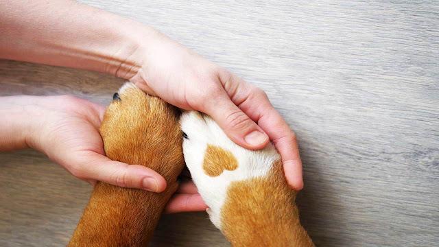 pet insurance, best pet insurance, renters insurance, pet insurance quotes, best dog insurance,