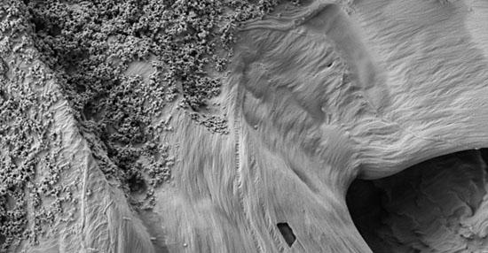 As coisas mais bizarras que você sempre quis ver no microscópio - Papel impresso com tinta