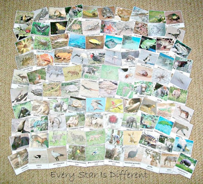 100 Animals of Africa Cards (Free Printable)