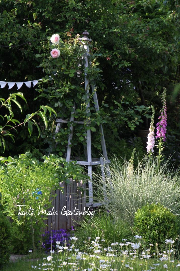 Gartenbeet im Juni mit Rosenobelisk, Margeriten, Gras, Holzzaun