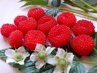 atherton raspberry fruit images