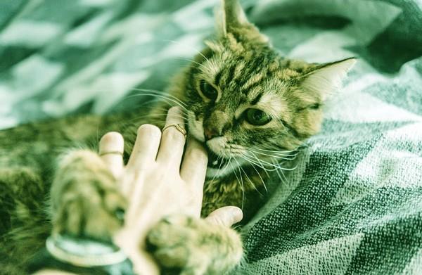 mimpi dicakar kucing