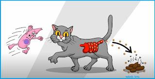 Toxoplasmosis efek dari bahaya memelihara kucing