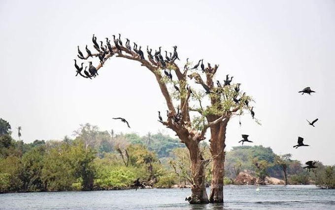 Borey O'Svay in the Stung Treng Natural scenery is wow this season!