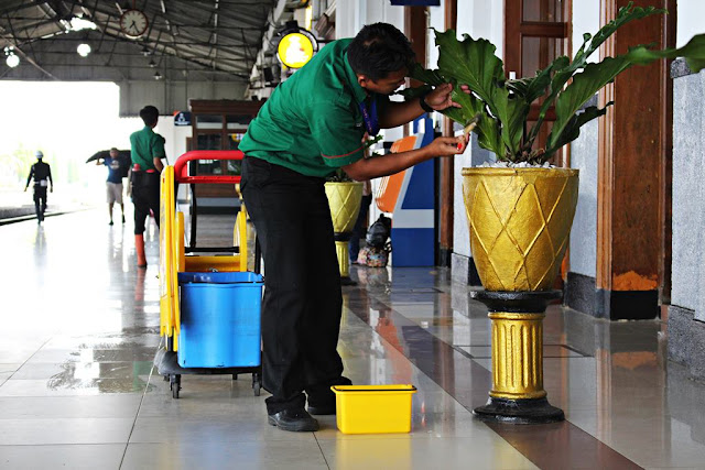 Cleaning Leaves of Decorative Plants - Showing Your Commitment