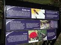 Importance of growing sustainable roses - Wellington Botanic Garden, New Zealand