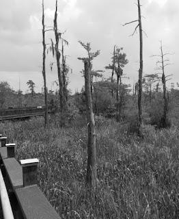 haunted swamp 3