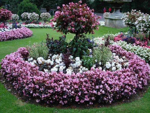 Plantar en macizos o canteros for Arboles bonitos de jardin