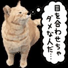 A stray cat moves 4