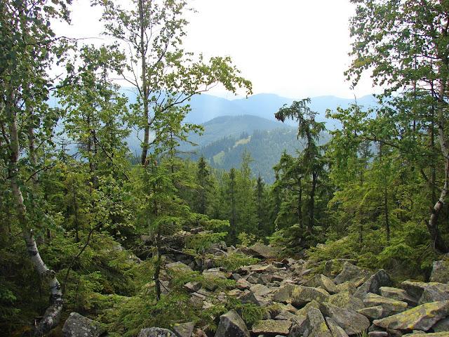 Вид с хребта Чортка в сторону нашего спуска к горе Рипна