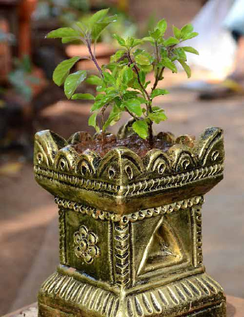 Story Greatness Of Tulsi Leaves – Saving Man From Certain Death