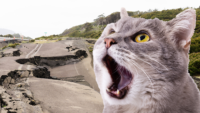 Benarkah Kucing Berperilaku Aneh sebelum Terjadi Bencana? Begini Penjelasannya